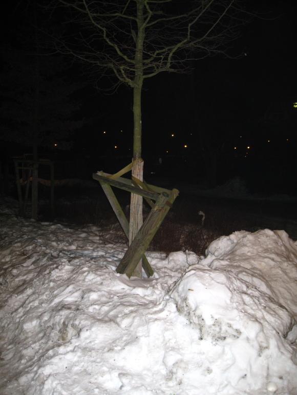 Ein Baum, der in Marzahn unbeschadet überlebt hat, ist zu allem fähig! Quelle: Sash
