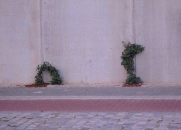 Wenn Pflanzen nicht klettern können, Quelle: Sash