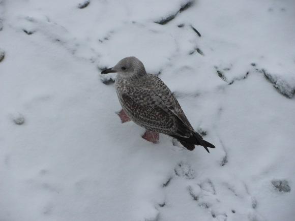 Umschulung zum Pinguin, Quelle: Sash